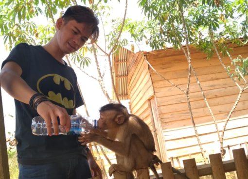 nafkah bagi binatang