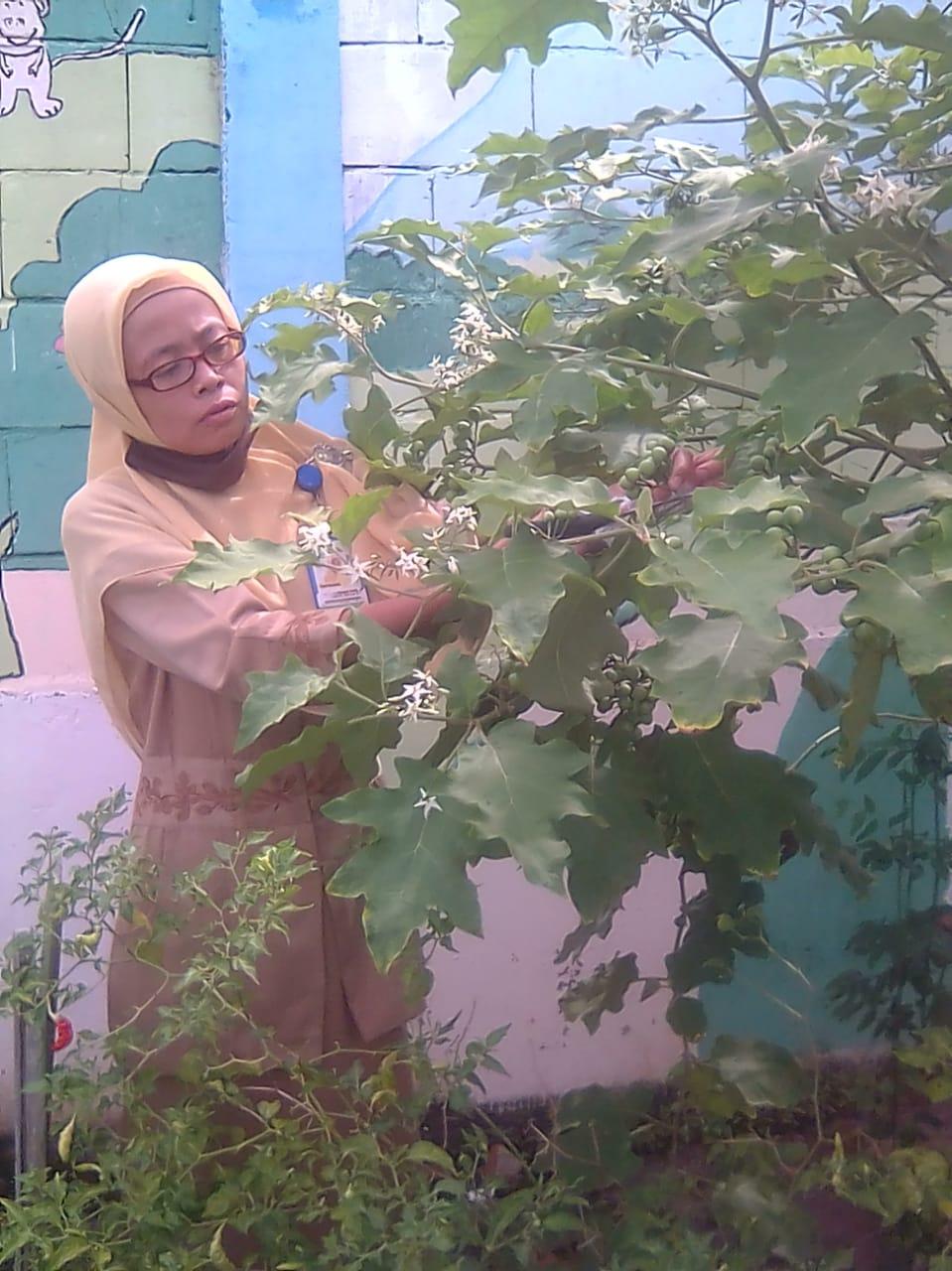 akhiri pembelajaran dengan tema tanaman